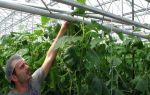 Шпалера для огурцов: виды, материалы, преимущества, особенности подвязки