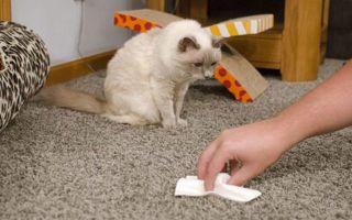 Как почистить ковер в домашних условиях бытовой химией, народными средствами