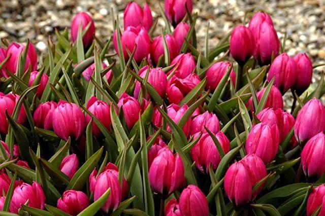 Каталог многолетних цветов для дачи: фото с названиями