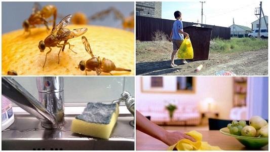 Как избавиться от мошек на кухне: способы, причины, меры профилактики, советы и секреты