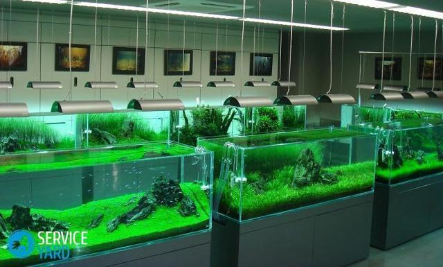 Как сделать аквариум своими руками из стекла: пошаговая инструкция