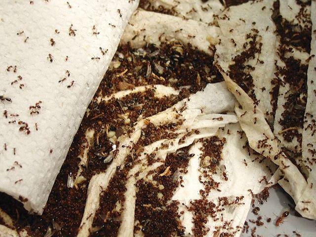 Как избавиться от муравьев в доме: способы и средства борьбы, меры профилактики