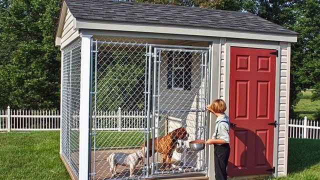 Вольер для собак: фото и варианты уличных и домашних конструкций