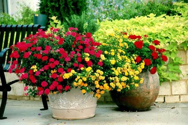 Бетонные уличные вазоны для цветов: секреты изготовления
