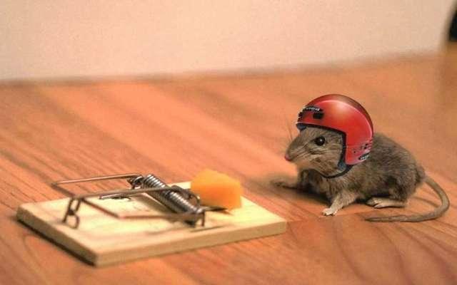 Как избавиться от мышей в квартире и частном доме: рабочие советы