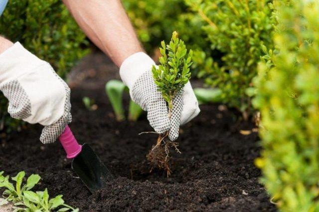 Быстрорастущие вьющиеся растения для забора: обзор вариантов