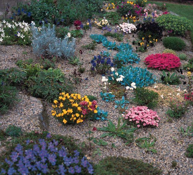Растения для альпийской горки: фото и названия, примеры рокариев
