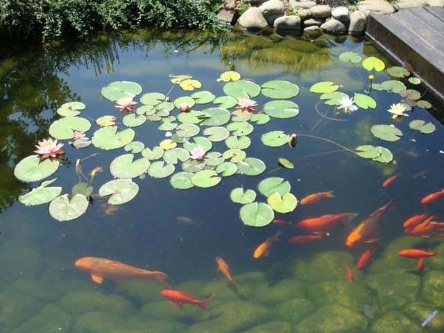 Пруд для разведения рыбы своими руками - практические советы!