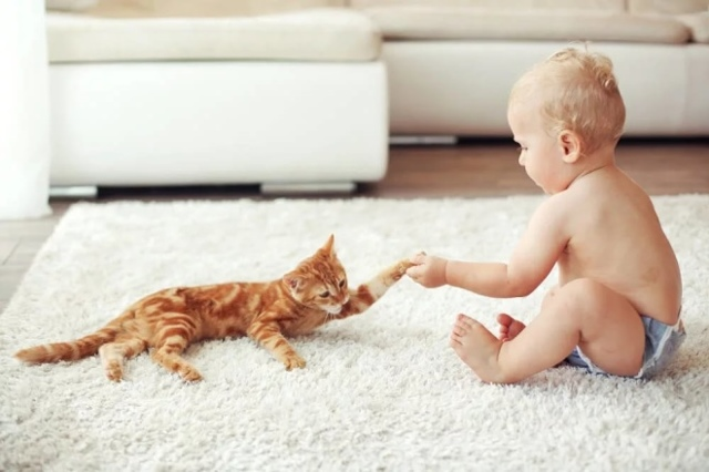 Увлажнитель воздуха для детей: какой лучше и секреты выбора