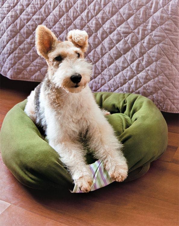 Лежанка для собаки своими руками