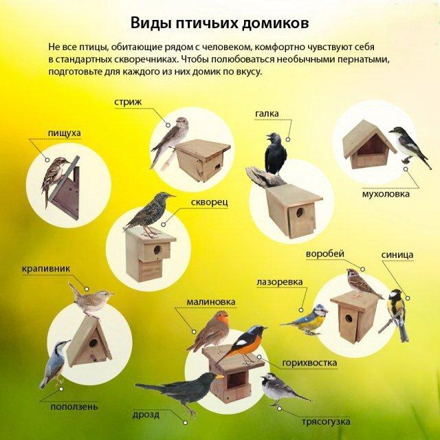 Скворечник своими руками из дерева: чертежи, мастер-классы